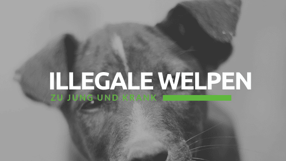 Illegale Welpen