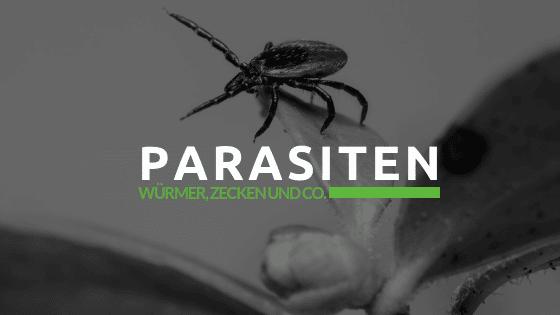 Parasiten von Hund und Katze