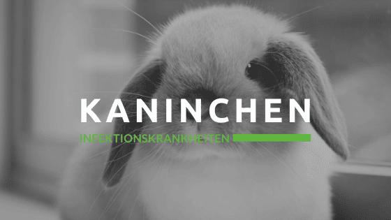 Impfung bei Kaninchen